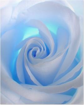 Poster Blue Rose