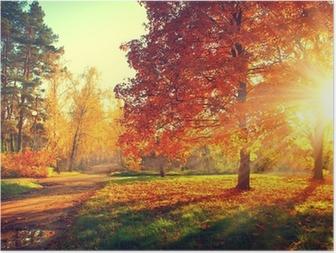 Poster Bomen in de herfstzon