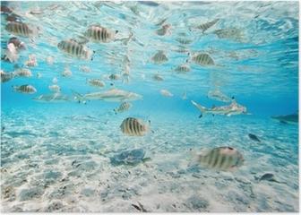 Bora Bora underwater Poster