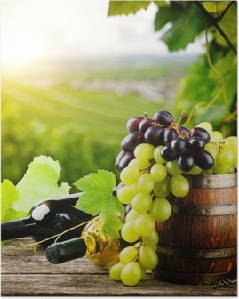 Bottles of red and white wine with fresh grape Poster