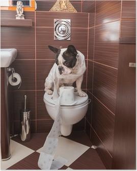 Poster Bouledogue français assis sur des toilettes à la maison