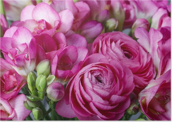 Bouquet of pink freesia flowers and pink persian buttercup poster bouquet of pink freesia flowers and pink persian buttercup poster mightylinksfo