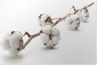 Poster Branchement de coton