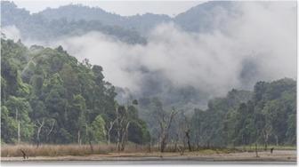 Poster Brouillard Matin et arbres morts dans la forêt tropicale dense, Perak, Malaisie