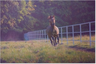 Brown horse galloping on the trees background along white fence at the summer Poster