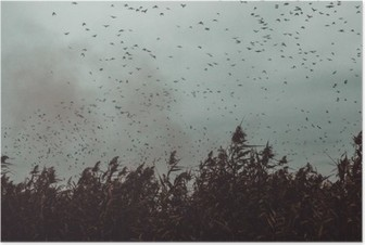 bunch of Birds flying close to cane in a dark sky- vintage style black and white Poster