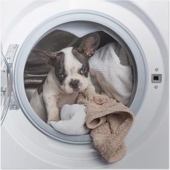 Póster Cachorro bulldog francés dentro de la lavadora