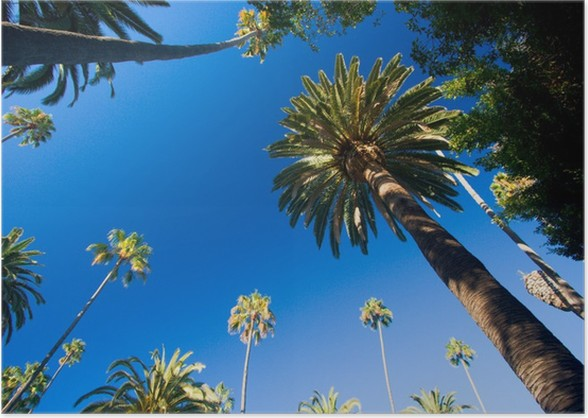 california palm trees poster pixers we live to change