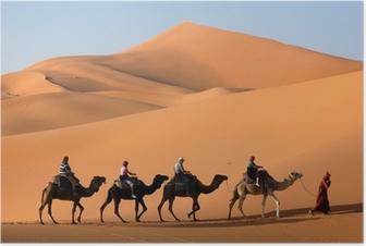 camel caravan in the sahara desert Poster