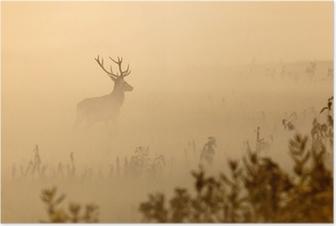 Poster Cerfs rouges avec de grands bois se dresse sur le pré matin brumeux