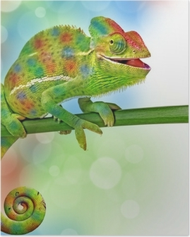 chameleon and colors Poster
