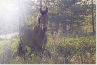 Poster Cheval brun au milieu d'un pré dans l'herbe, les rayons du soleil, tonifiés.