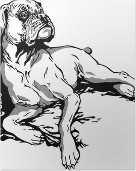Poster Chien boxer blanc noir