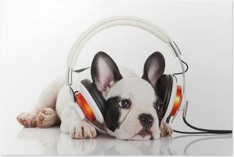 Poster Chien écouter de la musique avec un casque isolé sur blanc backgro