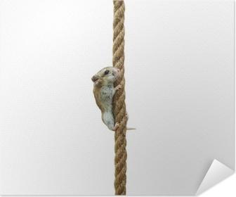 Climbing hamster Poster