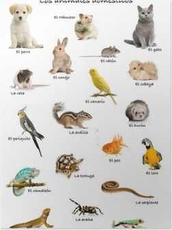 Collage of pets and animals in Spanish Poster