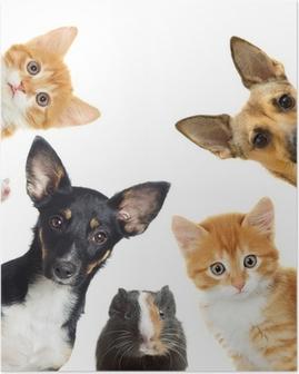 Poster Collection huisdieren