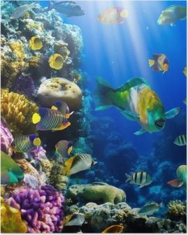Poster Colonie de corail et le corail poissons