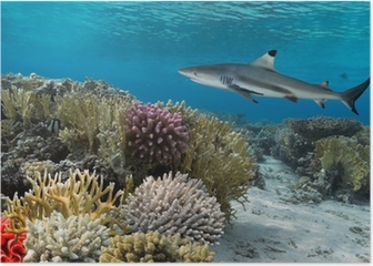 Colorful underwater coral reef with yellow stripped fish and big Poster
