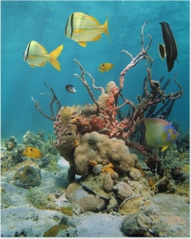 Colorful underwater scenery with corals and sea sponges Poster