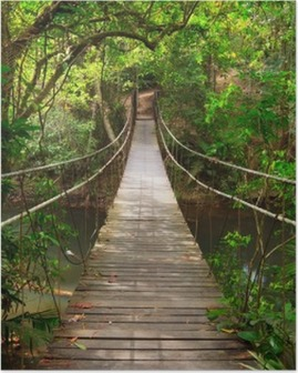 Poster Combler dans la jungle, Parc national Khao Yai, Thaïlande