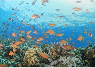 Coral Reef Underwater Poster