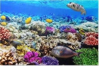 Poster Coraux et de poissons dans la mer Rouge. Egypte, Afrique.