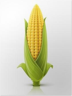 corncob vector illustration Poster