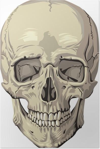 Póster Cráneo humano • Pixers® - Vivimos para cambiar