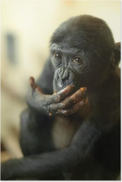 cute baby bonobo monkey poster mammals