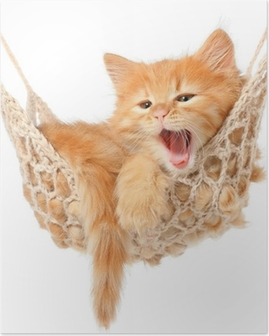 Cute red-haired kitten in hammock Poster
