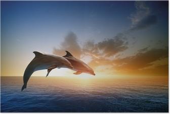 Póster Delfines saltando