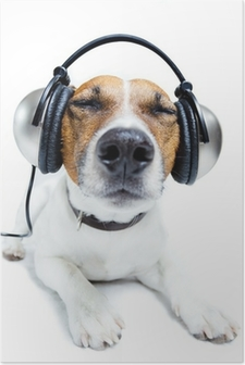 Dog listening music Poster