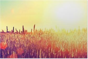 Poster Domaine. Paysage rural sous la lumière blanche