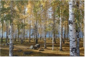 Poster Een berkenbos in de herfst
