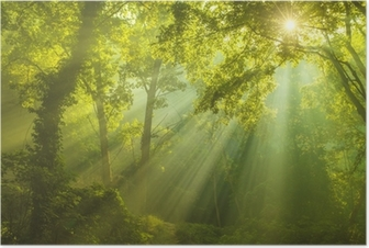 Póster El Bosque de los cielos