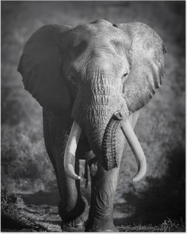 Poster Elephant Bull (traitement artistique)