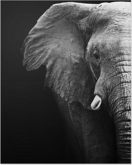 Poster Elephant close up