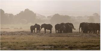Elephants, Amboseli National Park Poster