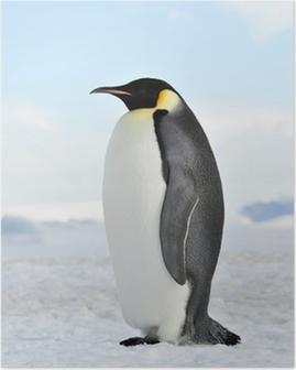 Poster Empereur pingouin