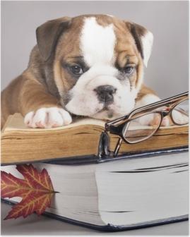 Poster Engels Bulldog en boek, en glazen