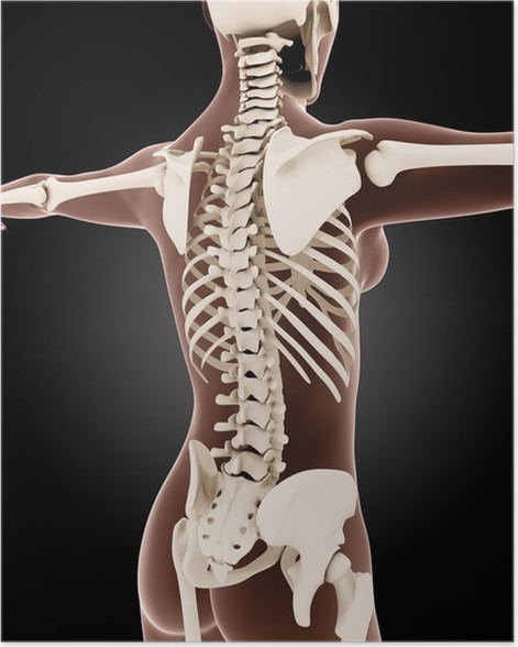 Póster Esqueleto médico femenino • Pixers® - Vivimos para cambiar