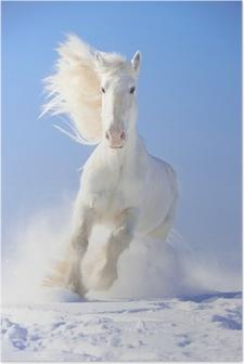 Poster Étalon blanc de chevaux galopent au point avant