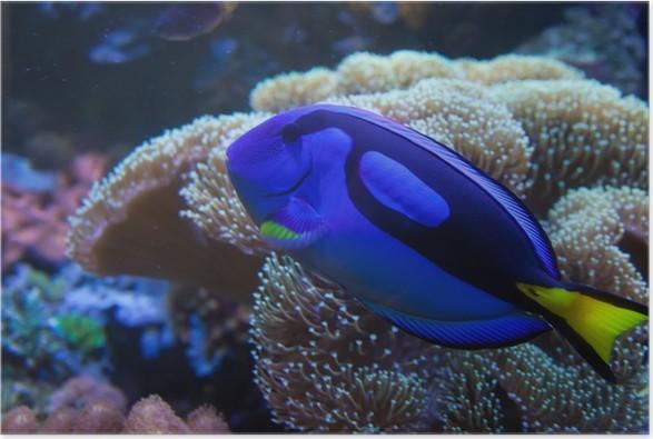 Exotic Aquarium Fish Poster