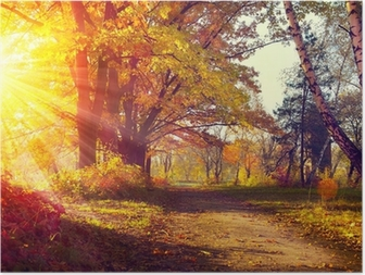 Fall. Autumnal Park. Autumn Trees and Leaves in sun light Poster