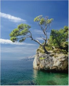 Famous beautiful rock with pine trees in Brela in Croatia Poster