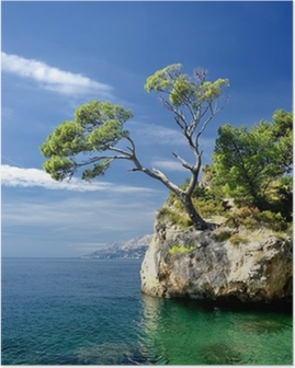 Famous beautiful rock with pine trees in Brela in Croatia Poster