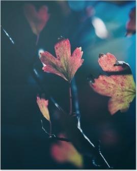 Poster Feuilles d'automne dans la lumière du soleil