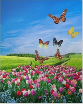 Field of colorful flowers and a butterfly group Poster
