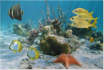 Fishes and sea star Poster